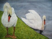 """The Swans"""