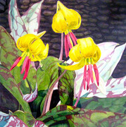 """Yellow Trout Lilies"""